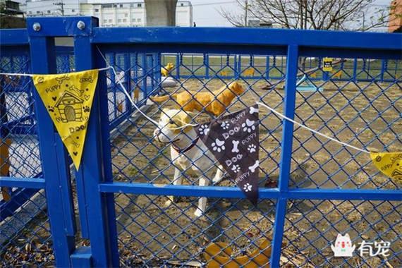 迷宫、跷跷板,宠物也有自己的公园了!